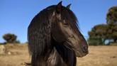 Kuda disebut-sebut merespons gerakan tubuh, napas, serta suara seseorang. Hal ini yang bisa membuat mereka mengetahui jika orang di hadapannya sedang depresi. (REUTERS/Juan Medina)