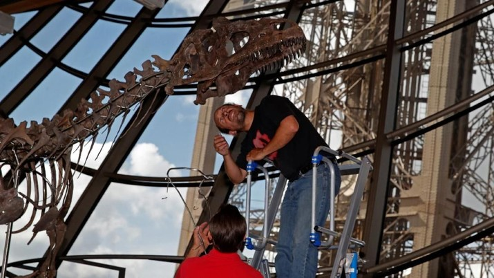 Fosil Dinosaurus Spesies Baru Rp 19 T Dilelang di Eiffel