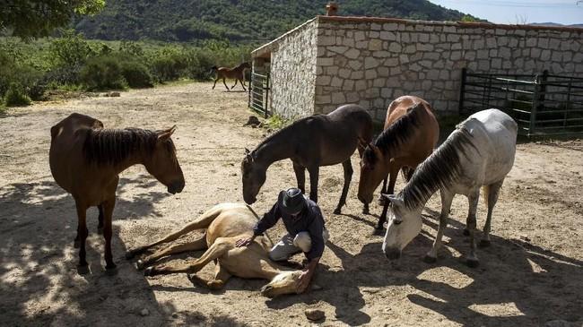Terapi menggunakan kuda bukan hanya dilakukan oleh Fernando Noailles, tapi juga beberapa tempat lainnya di dunia. Di Inggris terapi seperti ini juga digunakan untuk anak-anak. (REUTERS/Juan Medina)