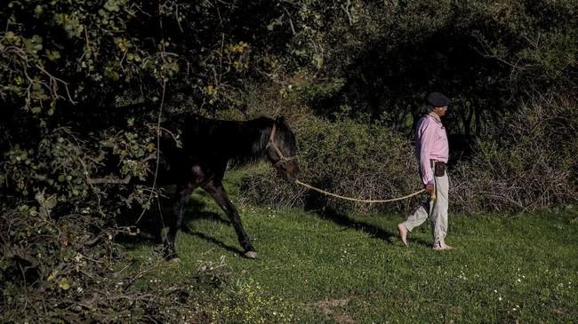 Orang-orang yang mengikuti sesi terapi Noailles menghabiskan waktu bersama kuda-kuda dan mempelajari gerakan mereka karena diyakini mencerminkan kondisi mental para pasien. (REUTERS/Juan Medina)