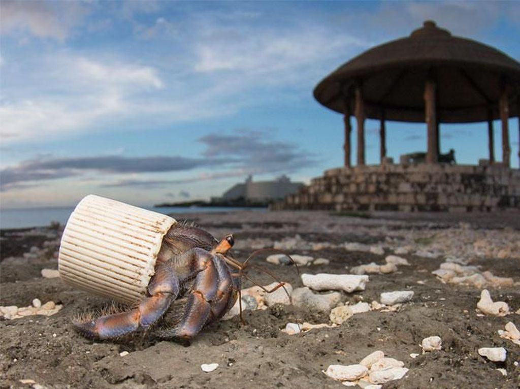 World Environment Day 2018: Hindari Polusinya, Bukan Plastiknya