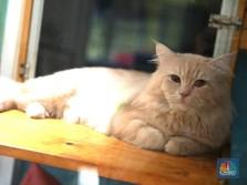 Habis Macan & Singa, Kini 2 Kucing Positif Terinfeksi Corona