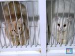 Hotel Kucing Raup Omzet Jelang Lebaran