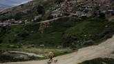 Seorang pria membawa barang-barang daur ulang berjalan bersama anjingnya yang mulutnya membawa kantung berisi barang-barang daur ulang di perkampungan kumuh di Soacha, luar kota Bogota, Kolombia. (Reuters/Nacho Doce)