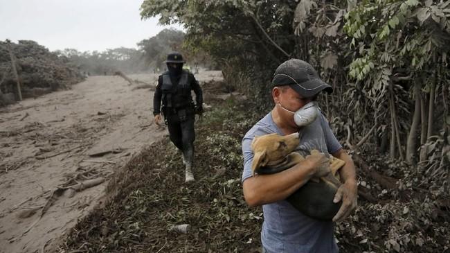 Tak kenal lelah, para petugas penyelamat terus menembus medan yang terjal demi menyelamatkan makhluk tak berdaya tersebut. (Reuters/Luis Echeverria)