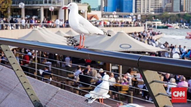 Sejak pagi hingga malam hari, para turis memenuhi kawasan Sydney Opera House dan sekitarnya. Suhu udara yang mencapai 12 derajat Celsius saat siang hari dan bisa mencapai 5 derajat Celsius tak menyurutkan turis untuk beraktivitas.