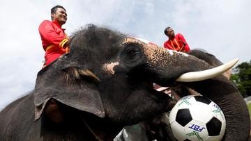 Demam Piala Dunia Gajah Gajah Kampanyekan Anti Judi Bola