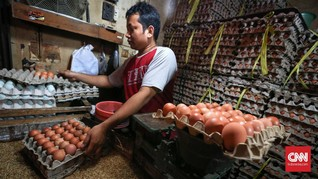 Pelemahan Rupiah Bikin Harga Telur Merangkak