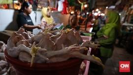 Di Sebagian Wilayah, Harga Ayam Masih Tinggi