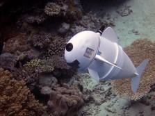 Jika Ingin Mencari Nemo, Anda Mungkin Perlu SoFi, Ikan Robot