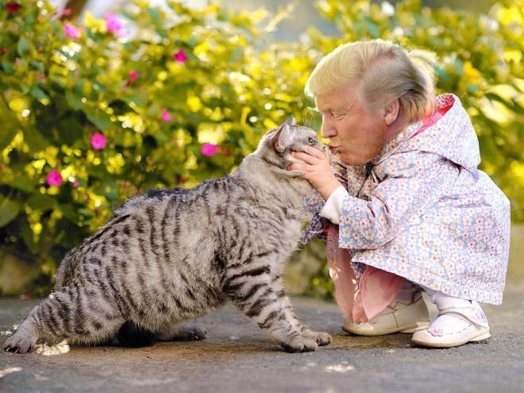 Cinta kucing. Foto: Internet