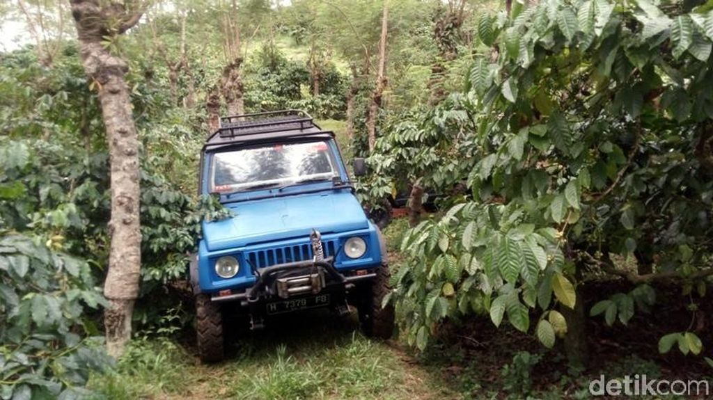 Foto: Seru! Naik Jeep Keliling Kebun Kopi Banaran