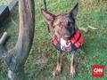 Anjing K9, Kawan Setia Polisi Amankan Lebaran 2018