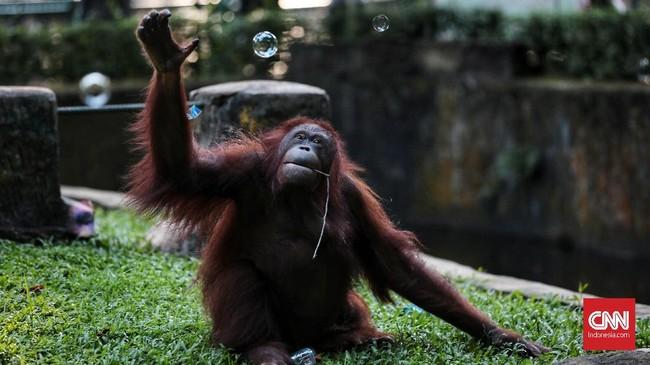 Beberapa satwa yang menjadi favorit pengunjung di antaranya jerapah, gajah, dan gorila.