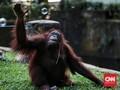Medan Zoo Barter Koleksi dengan Ragunan