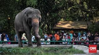 Pengunjung Ragunan Tinggi, Gajah dan Gorila Binatang Favorit