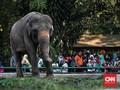 Atlet Korsel Berwisata di Kebun Binatang Ragunan