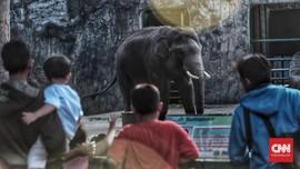 FOTO: Lebaran, Kala Ragunan Diserbu Wisatawan