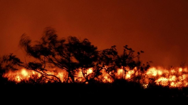FOTO: Hancurnya Kebun Ganja Disiram Lava Kia