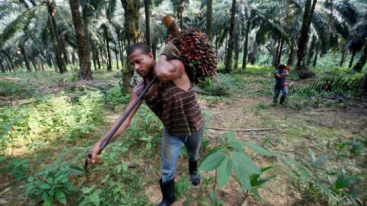 FILE PHOTO: Workers collect oil palm fruits at Felda Sungai Tengi Selatan plantation in Sungai Tengi, 100 km (62 miles) north of Kuala Lumpur June 22, 2012. REUTERS/Bazuki Muhammad