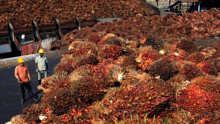 Palm oil woes.	(Reuters/Samsul Said)