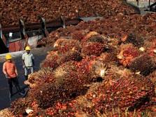 Harga CPO Tinggi, eh Indeks Sektor Agri Malah Melempem