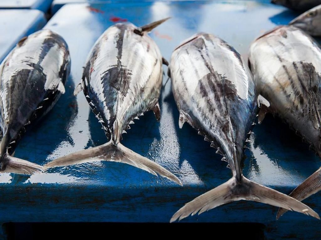 Kandungan protein dan omega-3 pada ikan bisa jadi alternatif santapan bagi penderita diabetes. Konsumsi ikan tidak akan meningkatkan gula darah dalam tubuh jadi lebih baik pilih ikan dibandingkan makan nasi, roti atau pasta. Foto: Istock
