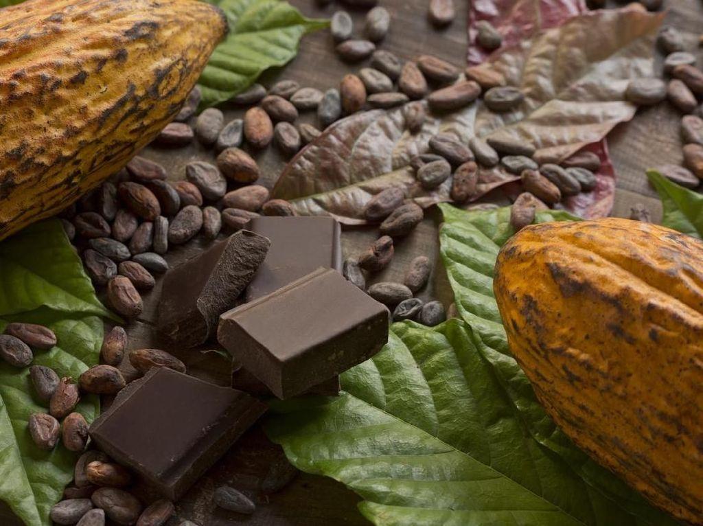 Biji cokelat mengandung antioksidan yang tinggi termasuk epicatechin yang berperan untuk menyeimbangkan gula darah. Pastikan hanya mengonsumsi dark chocolate, bukan milk chocolate yang sudah ditambah gula. Foto: Istock