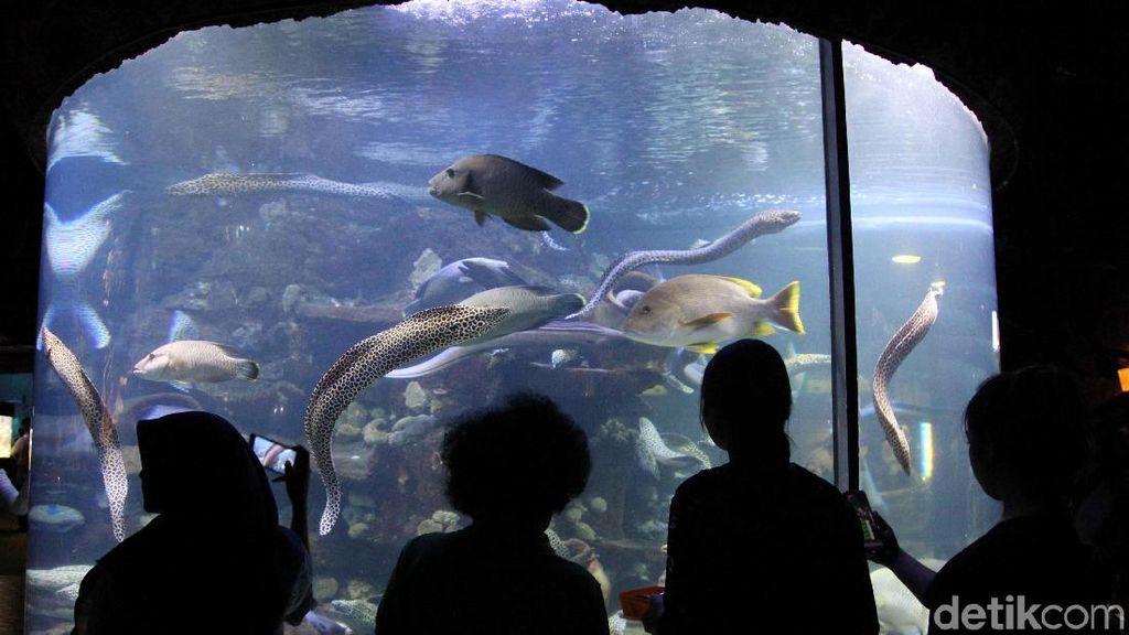 Sambut Hari Anak Nasional, Seaworld Beri Diskon 50%