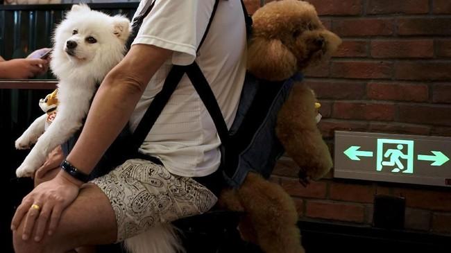 Seorang pria membawa dua ekor anjing di sebuah pasar tradisional di Shanghai, China. (Reuters/Aly Song)