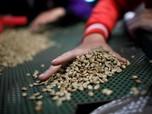 Industri Kopi Stagnan, Mungkin 2 Tahun Lagi RI Jadi Importir