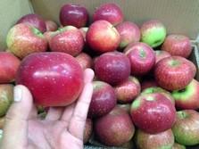 Dari Apel China Sampai Kapas, Penyebab Impor Juli Meroket