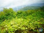 Serasa di Eropa, Ini Kebun Angin Raksasa RI
