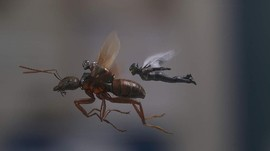 'The Wasp' Tak Ingin Punya Film Solo