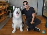 Anjing Ini Jadi Bintang Instagram Berduit Ratusan Juta Rupiah