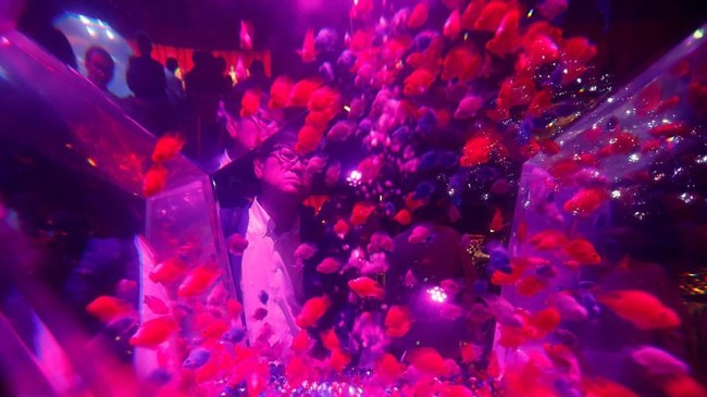 Art Aquarium 2018 buka mulai 6 Juli hingga 24 September pukul 11.00 hingga 23.30 waktu setempat. Penyelenggara membanderol tiket masuk 1.000 yen (sekitar Rp130 ribu) untuk pengunjung 13 tahun ke atas, dan 600 yen (sekira Rp78 ribu) bagi pengunjung berusia 4-12 tahun. (REUTERS/Kim Kyung-Hoon)