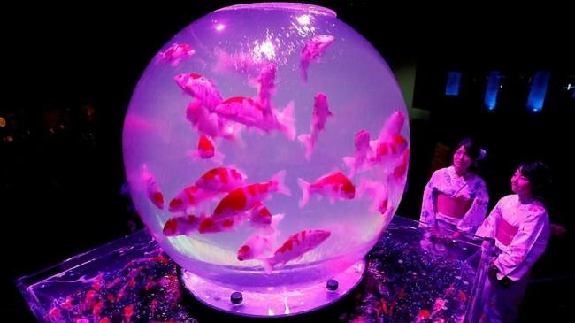 Seluruh karya seniyang dipamerkan di Art Aquarium 2018merupakan karya seniman Jepang Hidetomo Kimura. Bagi wisatawan yang tertarik, bisa mengunjungi lokasi pameran di Nihonbashi Mitsui Hall 2-2-1 Nihonbashi Muromachi Chuo-ku, Tokyo. (REUTERS/Kim Kyung-Hoon)