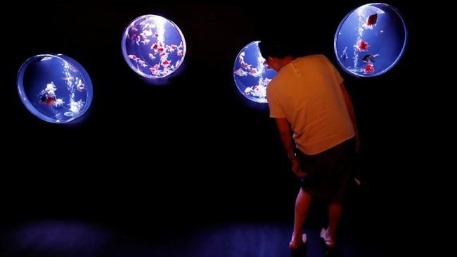 Pameran ini memamerkan mangkuk, akuarium, tangki dan kolam dengan pencahayaan dan efek berwarna-warni. Secara umum, acara ini lebih seperti tempat untuk menjepret foto menarik daripada berkontemplasi hasil karya seni. (REUTERS/Kim Kyung-Hoon)