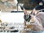 Bersua Savannah & Caracal, Kucing Senilai Ratusan Juta Rupiah
