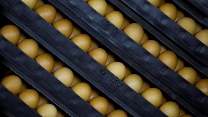 Di Depan DPR, Mendag Sebut Harga Telur Turun Ke Rp 18.000/Kg