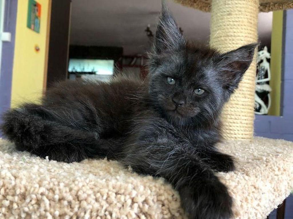 Kucing ini dianggap memiliki ekspresi wajah yang mirip dengan manusia. (Foto: Instagram)