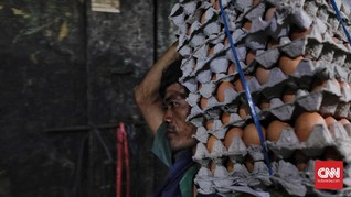 Upaya Pemerintah Daerah Atasi Kenaikan Harga Telur