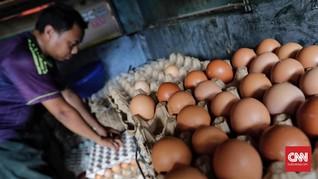 Harga Telur Ayam Naik di Sejumlah Daerah Jelang Akhir Tahun