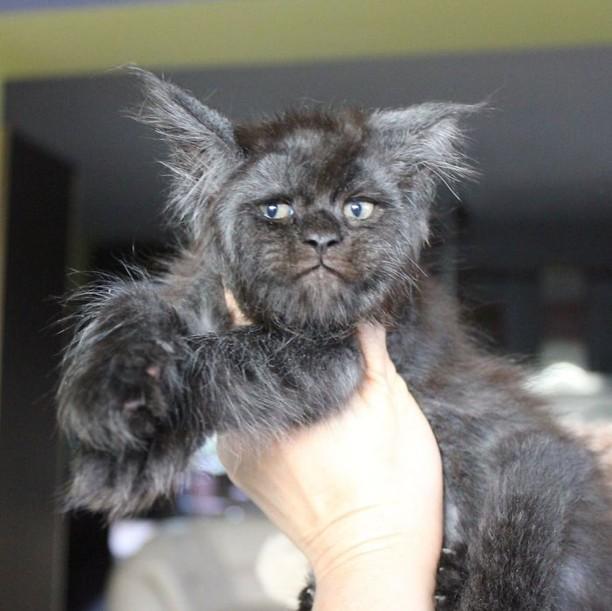 Viral Wajah Kucing Mirip Manusia, Lucu atau Seram?