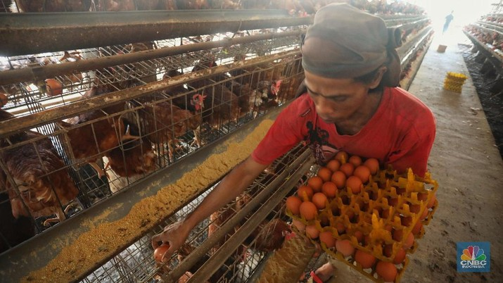 Harga Telur Ayam Diultimatum Turun Signifikan dalam 1 Minggu