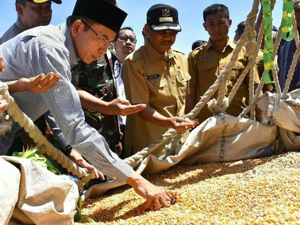 Alhamdulillah. Di triwulan pertama tahun 2018, NTB berhasil mengekspor jagung sebanyak 11.500 ton ke Filipina, dari total tahap awal 30.000 ton jagung, tulisnya. Wah, pantas saja sang gubernur sangat memperhatikan kondisi jagung yang sudah panen ini. Foto: Instagram tuangurubajang