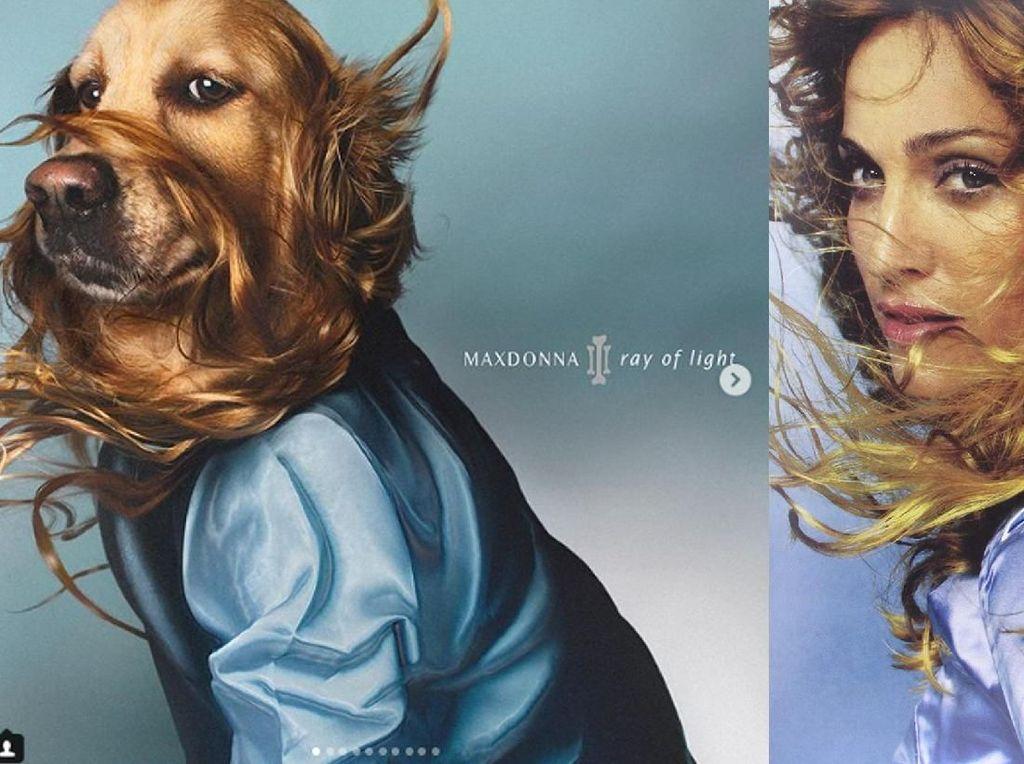 Ia pun juga membuat parodi dari cover album Madonna yakni Ray of Light.Dok. Instagram/max_et_vincent