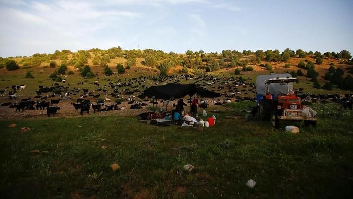 Kisah Gobut, Keluarga Penggembala Tanpa Rumah di Turki