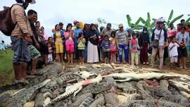 Warga Bantai 292 Buaya, Amuk Massa Tak Bisa Dibendung Aparat