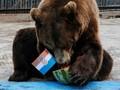 Beruang Siberia Prediksi Final Piala Dunia 2018